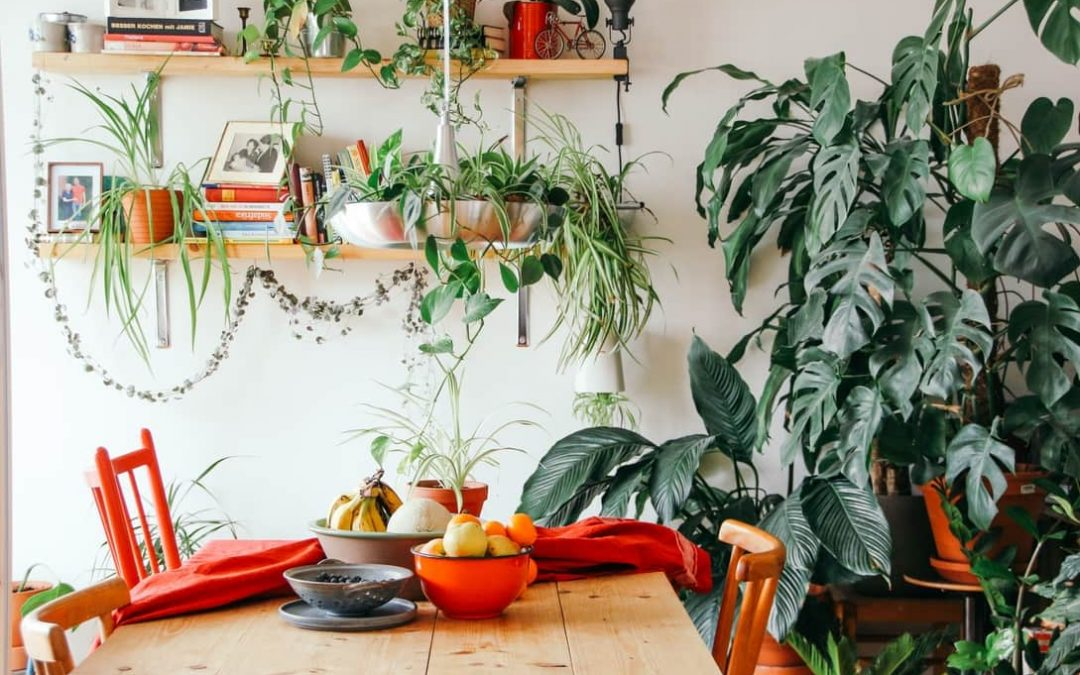 5 giveaway signs that it's time to repot your plants